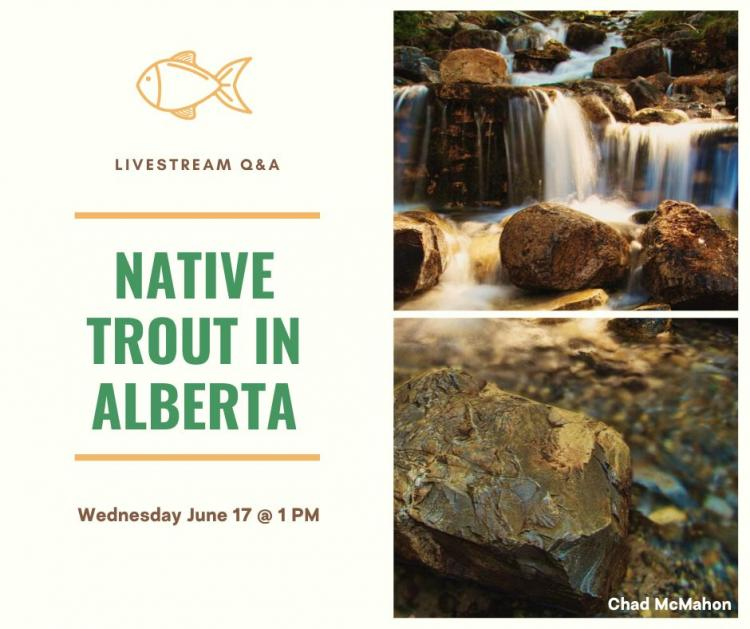 Native Trout in Alberta Banner