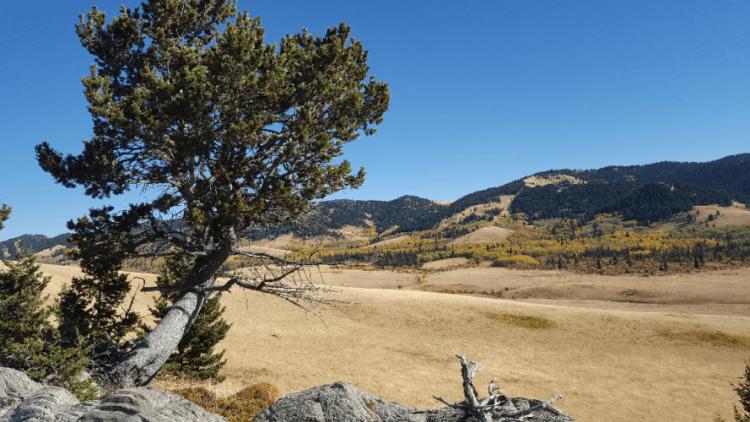 Whaleback landscape