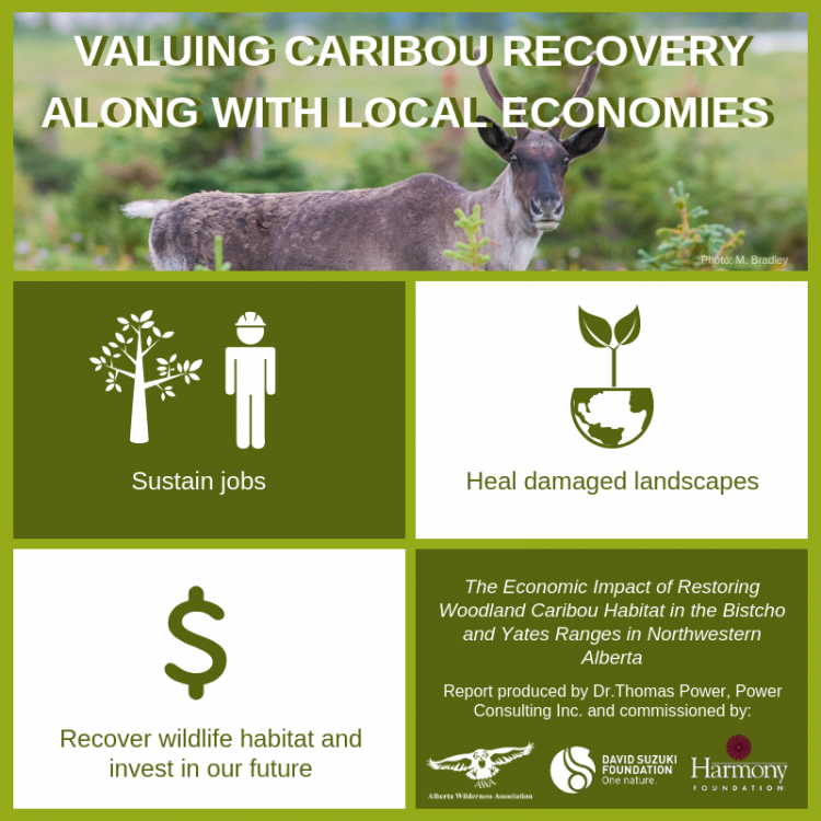 "Caribou Infographic ""Valuing Caribou Recovery Along with Local Economies"""