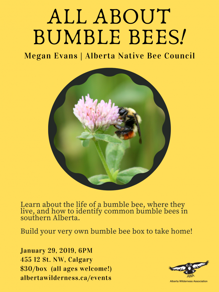 All About Bumble Bees